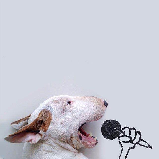 This Artist Uses His Bull Terrier To Create These Amazing Illustrations 118