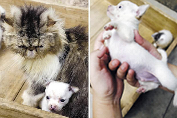 World First As Cat Gives Birth To A Dog 163