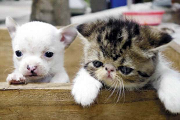 World First As Cat Gives Birth To A Dog 216