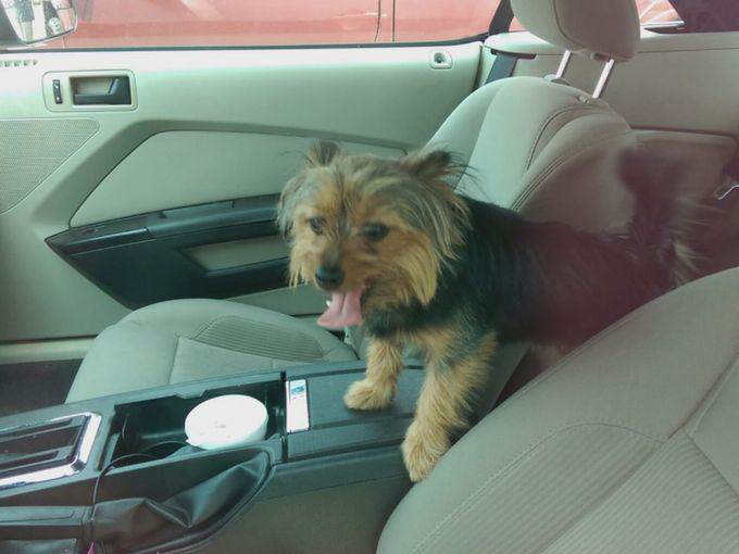 Man Arrested After Breaking Into Hot Car To Save A Dog 219