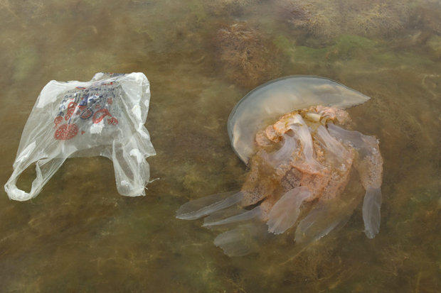 Massive Jellyfish With 6ft Tentacles Are Washing Up On Britains Beaches 226