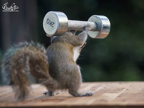 This Guy Found A Way To Photograph Squirrels Lifting Weights 23