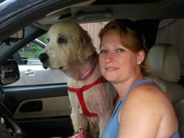 Dog Gets Second Chance At Life After Owner Is Killed In Tornado 236