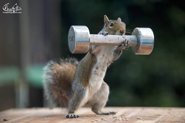 This Guy Found A Way To Photograph Squirrels Lifting Weights 31