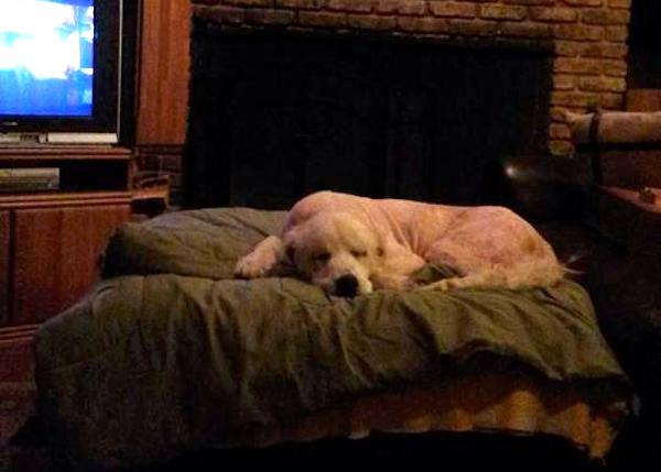 Dog Gets Second Chance At Life After Owner Is Killed In Tornado 315
