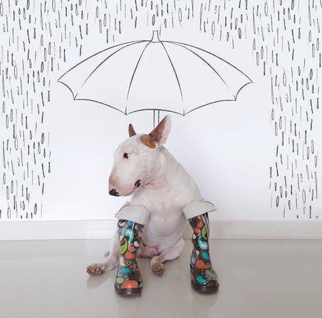 This Artist Uses His Bull Terrier To Create These Amazing Illustrations 32