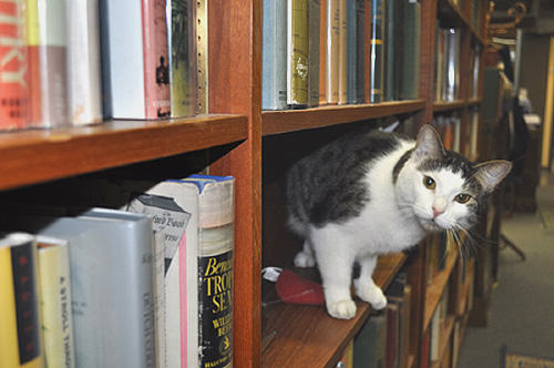 This Office Has Opened A Kitten Library So That Workers Can Borrow A Cat 321