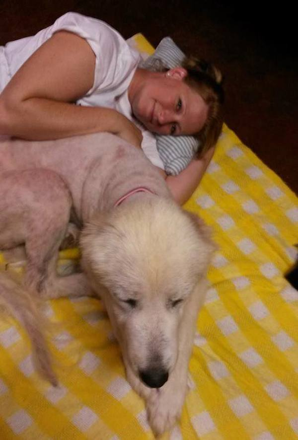 Dog Gets Second Chance At Life After Owner Is Killed In Tornado 48