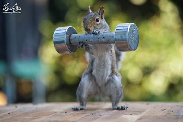 This Guy Found A Way To Photograph Squirrels Lifting Weights 5