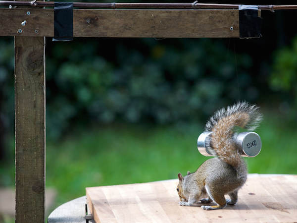 This Guy Found A Way To Photograph Squirrels Lifting Weights 7