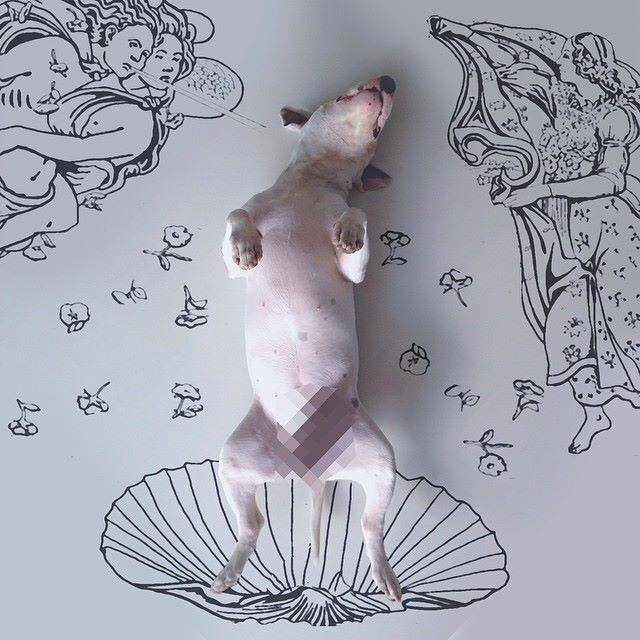 This Artist Uses His Bull Terrier To Create These Amazing Illustrations 71