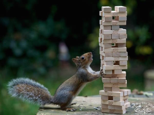 This Guy Found A Way To Photograph Squirrels Lifting Weights 9