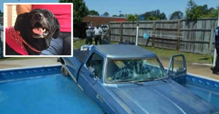 Dog Drives His Owners Car Into A Swimming Pool TN114