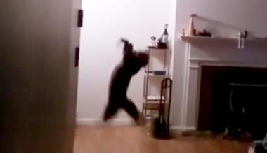 Watching This Cat Catch A Bat Out Of Mid Air Is Simply Epic bat