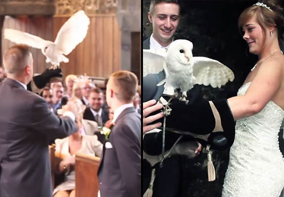 Owl Delivers Rings During Wedding Because Who Needs A Best Man? owl wedding WEB