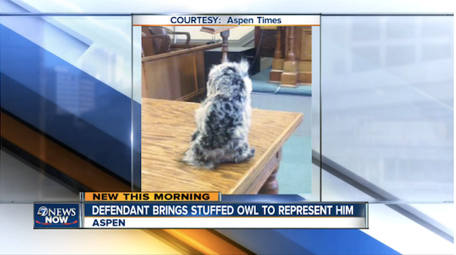 Man Shows Up In Court With Stuffed Owl As His Lawyer owl