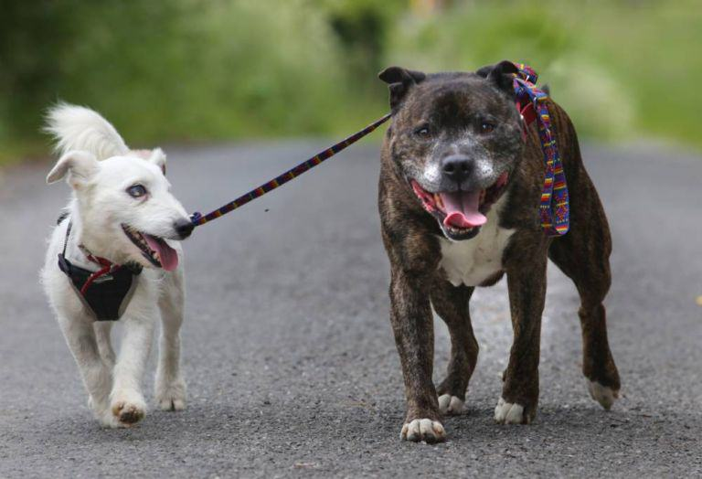 This Blind Dog Has His Own Guide Dog, And They Both Need A Home 1117