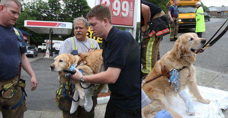 Brave Service Dog Jumps Between Blind Owner And Bus, Saves Her Life 129