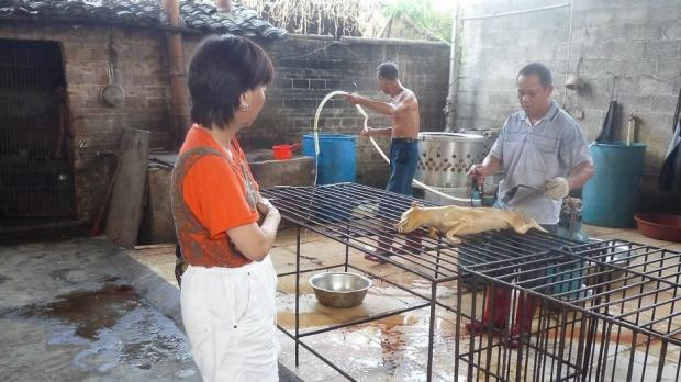 This Chinese Yulin Dog Meat Festival Must Be Stopped, Will See Slaughter Of 10,000 Dogs 1434429375760 1