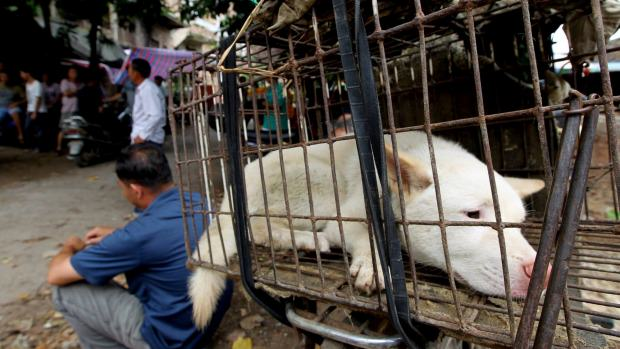 This Chinese Yulin Dog Meat Festival Must Be Stopped, Will See Slaughter Of 10,000 Dogs 1434429375760