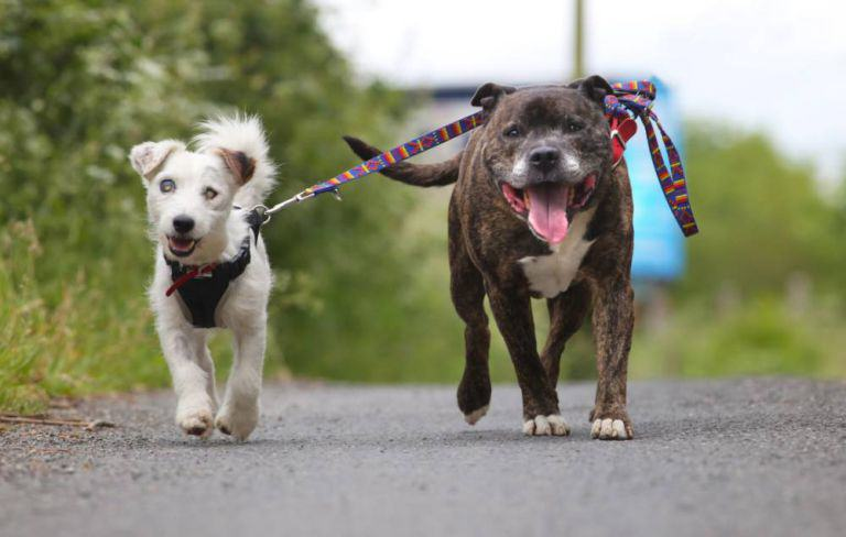 This Blind Dog Has His Own Guide Dog, And They Both Need A Home 318