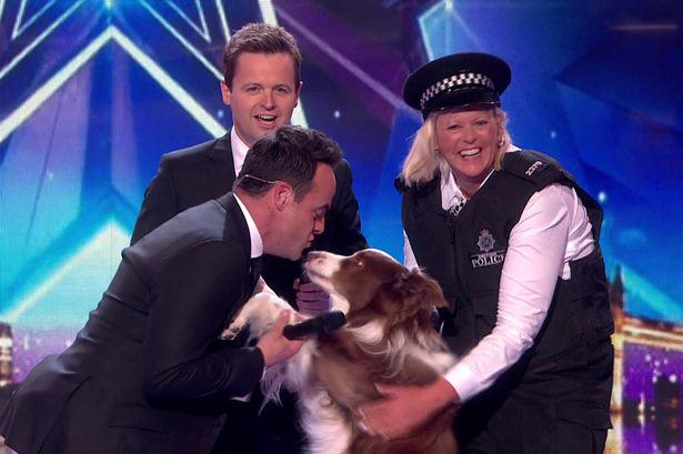Turns Out A Stunt Dog Walked The Tight Rope In The BGT Final Last Night Jules ODwyer and her Dog Matisse win Britains Got Talent Final