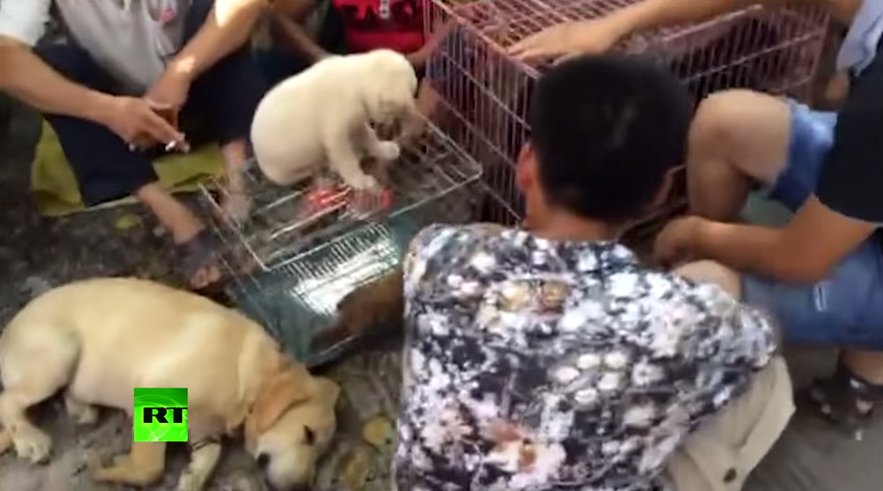 Hidden Camera Captures Preparations For Yulin Dog Meat Festival Screen Shot 2015 06 22 at 11.26.56