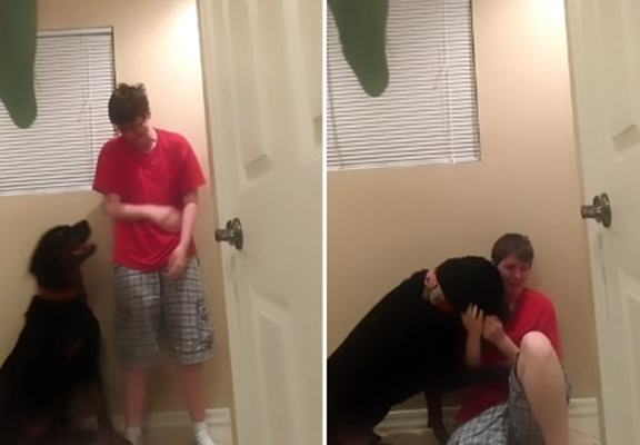 Service Dog Helps Owner With Aspergers Syndrome, Proves Why Dogs Are Amazing djc web
