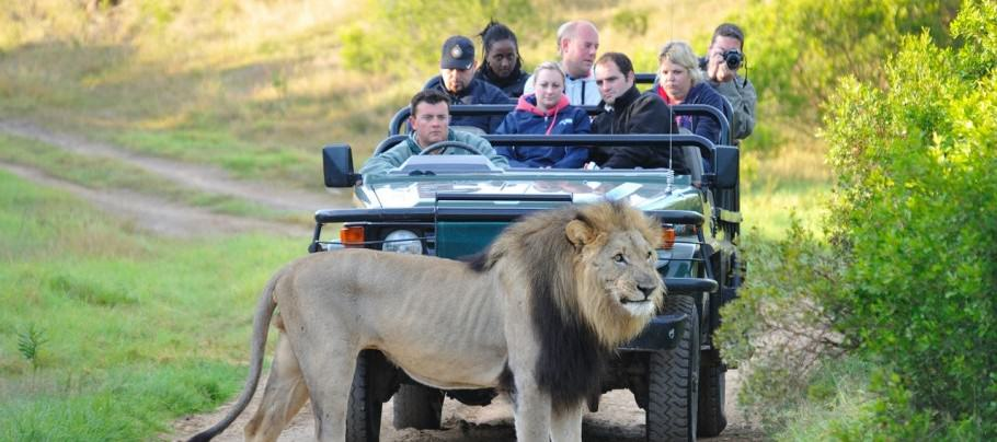 American Tourist Mauled To Death By Lion At South African Game Park lion2
