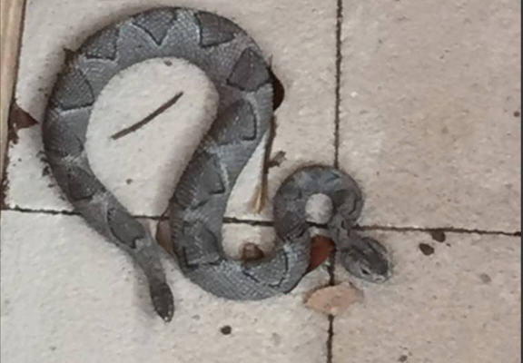 Police Have One Hour Stand Off With Snake, Find Out Its An Ornament police snake web