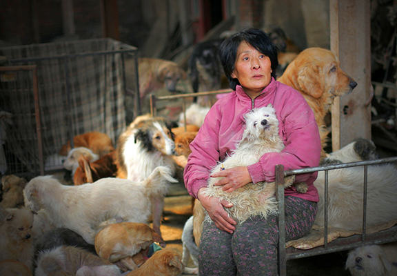 Retired Teacher Spends Money On Stray Dogs, Buys Them Food, Saves Them From Yulin Festival yang web