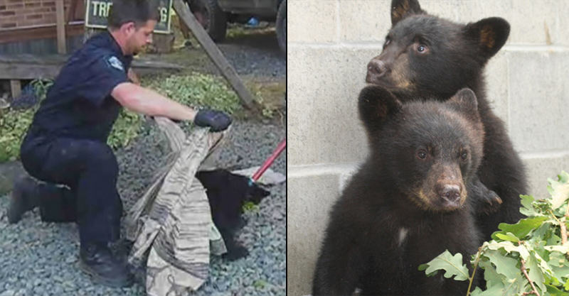 Conservation Officer Suspended For Refusing To Kill Bear Cubs Gets Ricky Gervais Backing 149