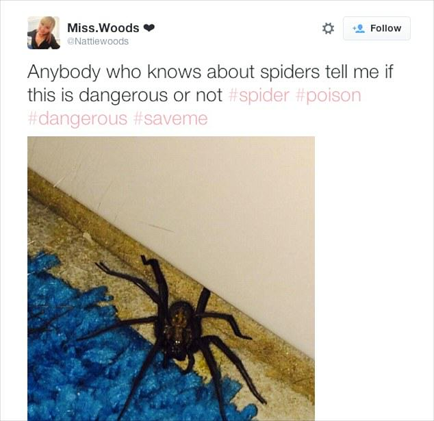 This Girl Is Being Stalked By A Wolf Spider In Her Own Home 2A83AFFE00000578 0 image a 41 1436872543906