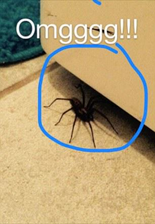 This Girl Is Being Stalked By A Wolf Spider In Her Own Home 2A83B00C00000578 0 image a 40 1436872533046