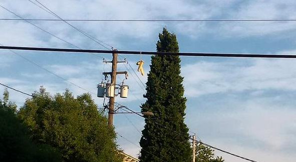In Portland, People Are Dangling Dildos From Power Lines 411