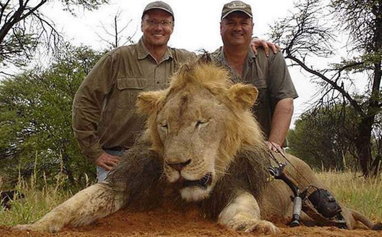 Lion killed from trophy hunting
