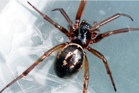 Graphic Images Of Northern Irish Woman Attacked By Spider In Bed 55ba2f50794db