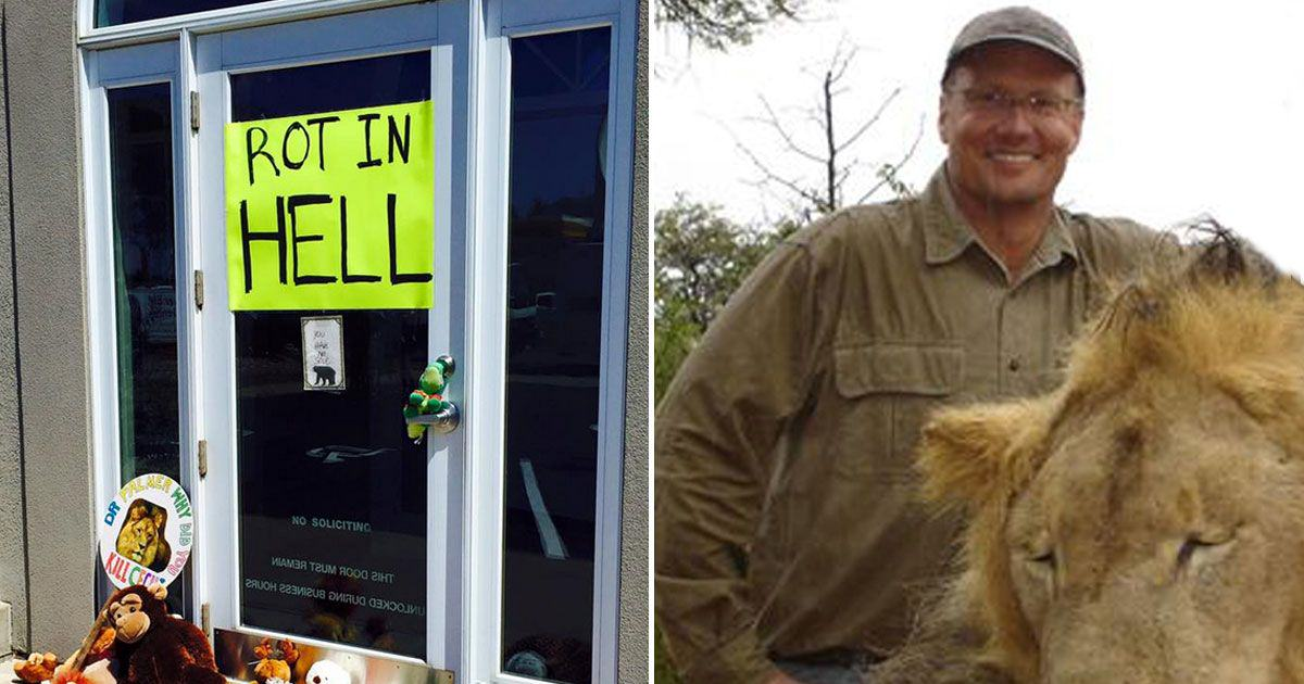 Zimbabwe Demands Extradition Of Cecil The Lion Killer Walter Palmer 55bb4a2ff287a