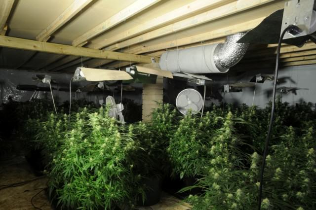 Cannabis Prohibition Has Gone To Pot: Users Of Plant Given Green Light North Yorkshire Police 640x426