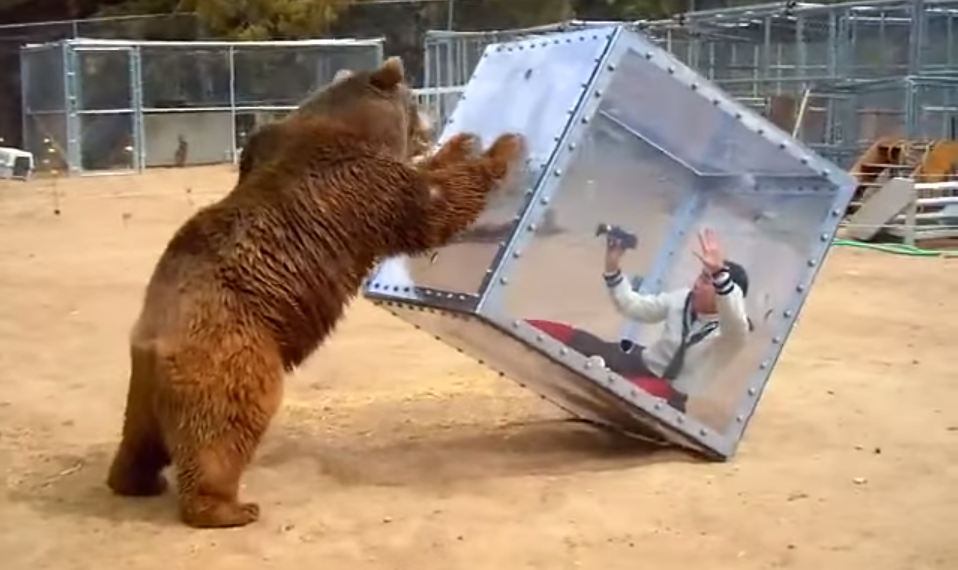 Japanese Gameshow Features A Bear And A Woman In A Cube, Obviously Screen Shot 2015 07 21 at 12.26.47