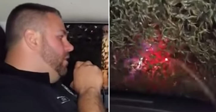 Police Officer Calls Snow Plow To Remove Plague Of Mayflies TN189
