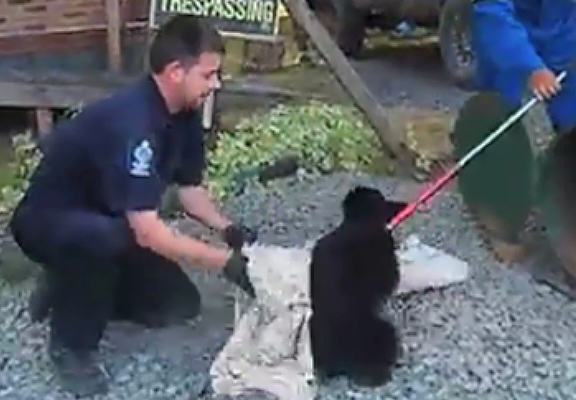 Wildlife Conservation Officer Suspended For Refusing To Kill Two Bear Cubs bryce web