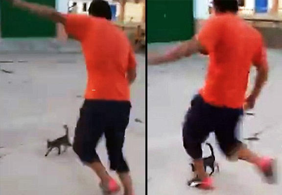 Shocking Video Of Boy Kicking Small Cat Through The Air Causes Outrage cat kick WEB