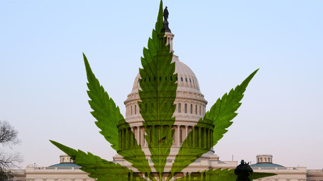 Washington Have Earned A FORTUNE Since Legalising Weed marijuana us 2
