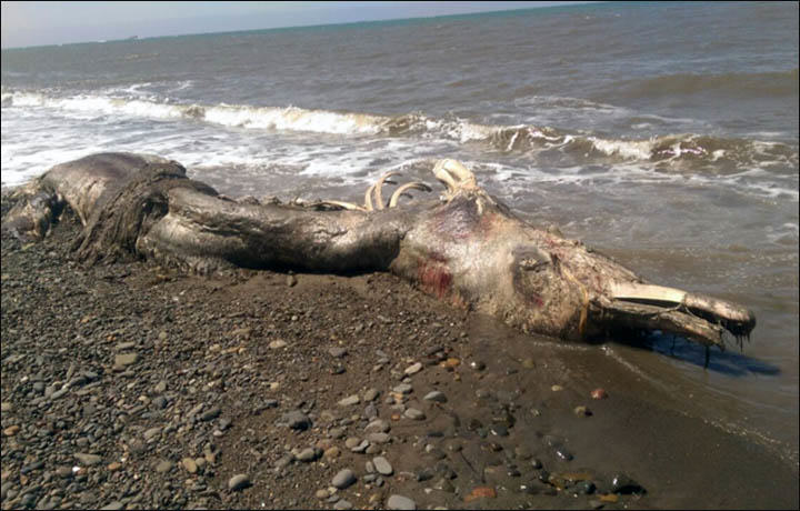 Nobody Knows WTF This Washed Up Sea Creature Is sea creature 2
