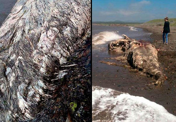 Nobody Knows WTF This Washed Up Sea Creature Is sea creature WEB