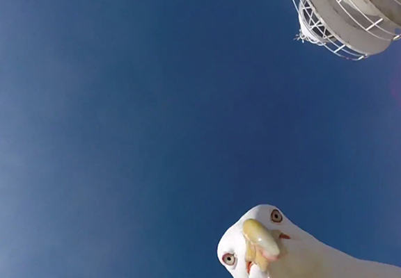 Seagull Steals GoPro Camera, Manages To Capture Amazing Footage Of Spanish Coast seagull web
