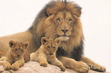 Jericho The Lion May Not Be Dead After All, He Isnt Cecils Brother AcTES2Qaqjeri1.jpg