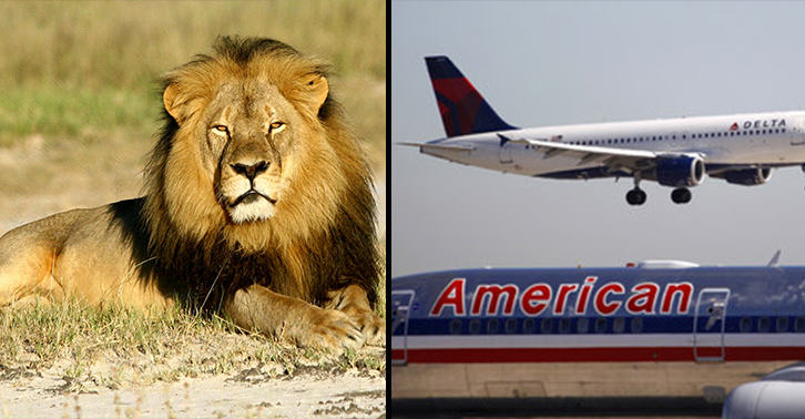 Major Airlines Ban Transport Of Big Game Trophies Following Killing Of Cecil The Lion ClM5FuYXA