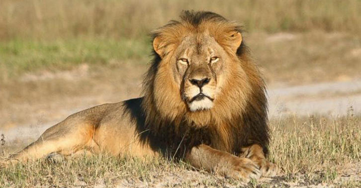 Jericho The Lion May Not Be Dead After All, He Isnt Cecils Brother UGfY4L8Svjeri fb.jpg